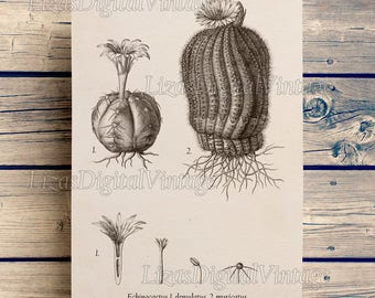 Cactus print, Botanical chart, Cactus wall art, Printable graphics, Cactus decor, Botanical poster, Botanical illustration PNG JPG HQ 300dpi