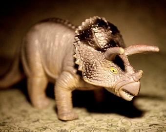 Triceratops  - Dinosaur Photograph - Various Sizes