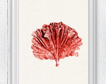 Sea fan coral no.01 - Antique sealife Illustration - sea life print-Marine  sea life illustration A4 print SWC056
