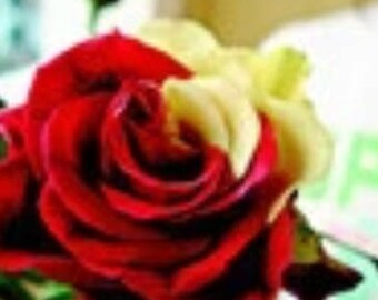 Gorgeous Rose Flower Red/Yellow. Qty. 20 Seeds