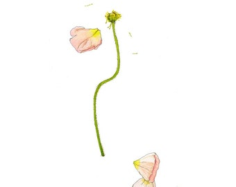Pink Poppy, Original Watercolor Painting, 9x12