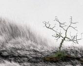 Wee Tree Mini Landscape