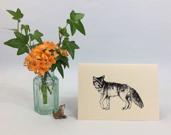 Coyote note card. Ink illustration of a coyote on recycled card. Natural history facts on the back. All occasion card, blank inside.