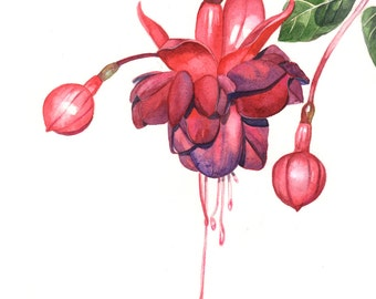 Fuchsia Watercolor painting PRINT of watercolor painting A3 size largest print