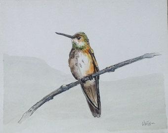 Allen's Hummingbird Pen and Ink Watercolor Painting