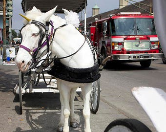 New Orleans Carriage Pulled by a White Unicorn Pegasus - A Pegacorn Mule and a Firetruck in NOLA Funny Photo Print