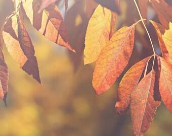 Orange Yellow Leaves Color Photo Print {blue, sky, tree, branch, fall, sunshine, sunlight, wall art, macro, nature & fine art photography }