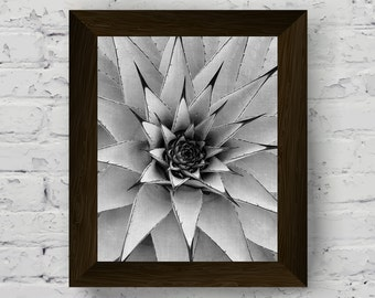 succulent wall art, cactus print black and white photography, cacti photo wall decor, printable art, instant digital download, modern print