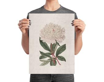 White Peony Botanical Matte Poster
