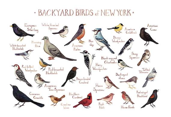 New York Backyard Birds Field Guide Art Print / Watercolor