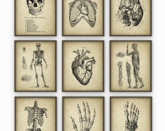 Human Anatomy Antique Art Print Set of 9 - Vintage Anatomy Home Decor - Antique Book Plate - Medical Student Gift Idea Picture Set of 9