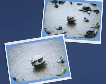 Cold Enough To Clam Blank Photo Greeting Card 2 Card Set