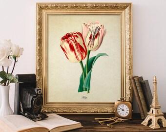 Antique Botanical Print, Tulip Print, Red and Pink Tulip Print, Vintage Home Decor, Natural History Art, Decorative Reproduction FL087