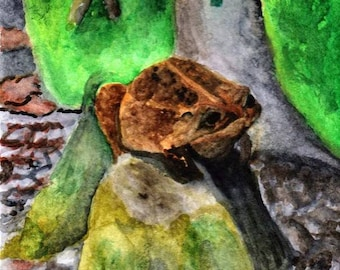 Toad Print From Original Water Color
