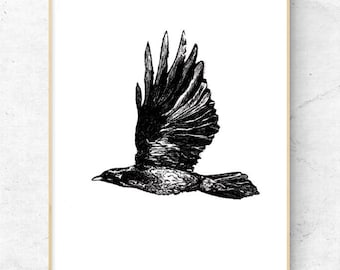 Black and White, Pen Drawing, Crow, Animal Art, Printable, Digital Download