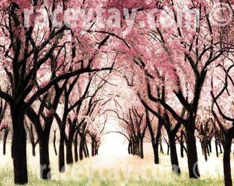 Cherry Blossoms Photograph Pink Trees Print Baby Girl Nursery Decor Nature Photography