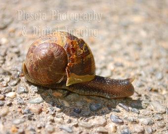 Resident Snail