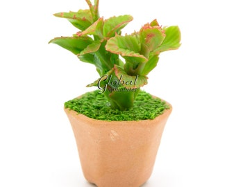 Dollhouse Miniatures Clay Copper Leaf Plant in 6 Sided Flowerpot