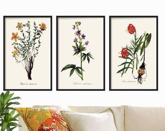 Vintage Botanical Print Set  - Antique Botanical Print - Floral Illustration - Botanical Prints - Wall Art Print - Prints - Farmhouse Decor