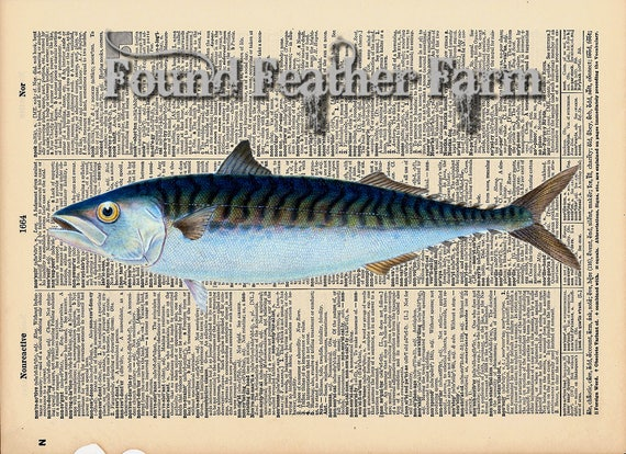 """Vintage Antique Dictionary Page with Antique Print """"Ocean Mackeral"""""""