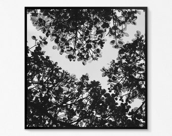 Roof leaf Canopy nature photography black and white art print 30 x 30 cm