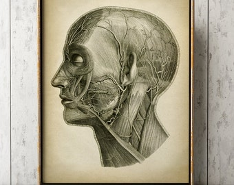 Head Anatomy Print, Vintage Anatomy Poster, Medical Wall Art, Doctor Gift, Anatomy Poster, Scientific Anatomy Print, Home Decor