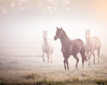 Horses in the fog photo or canvas, horse photography, equine photo, horse canvas, western art, horse art, quarter horse photo