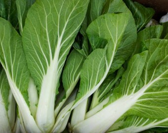 Pak Choi 100+ seeds - heirloom seeds - vegetable seeds - garden seeds - cabbage seeds - asian veg seeds - goldenrod homestead - asian greens