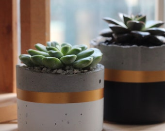 Cylinder Concrete Planter / Round Pot for succulents and cacti - Black & Gold