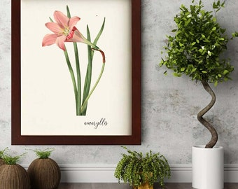 Digital Download Botanical  Amaryllis Flower Illustration