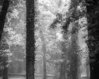 Elven Fine Art Photography Black and White Dreamy Romantic Fantasy landscape Tolkien inspired home decor soft misty mystical magical art