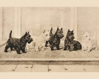 Dog Scottish Terrier Scottie Vintage Poster Repro FREE SHIPPING