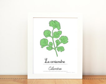 Kitchen Art Cilantro French Herbs print - 8x10 art print - Green Home decor Eco friendly Food Foodie Culinary Gourmet cook chef