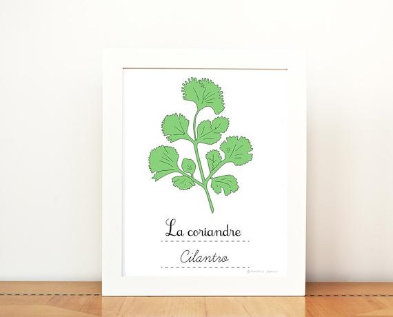 Kitchen Art Cilantro French Herbs print 8x10 art print