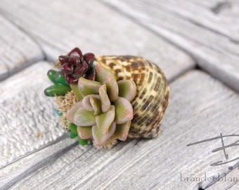 Faux Succulent Fairy Garden in a Shell