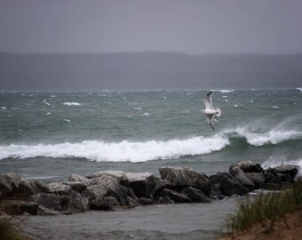 seagull bird stormy water lake bathroom decor seascape photography home decor