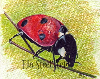 LADYBUG PRINT 8x10 of a colored pencil drawing by Ela Steel archival print ladybugs ladybirds giclee art realism insects bugs wall art red