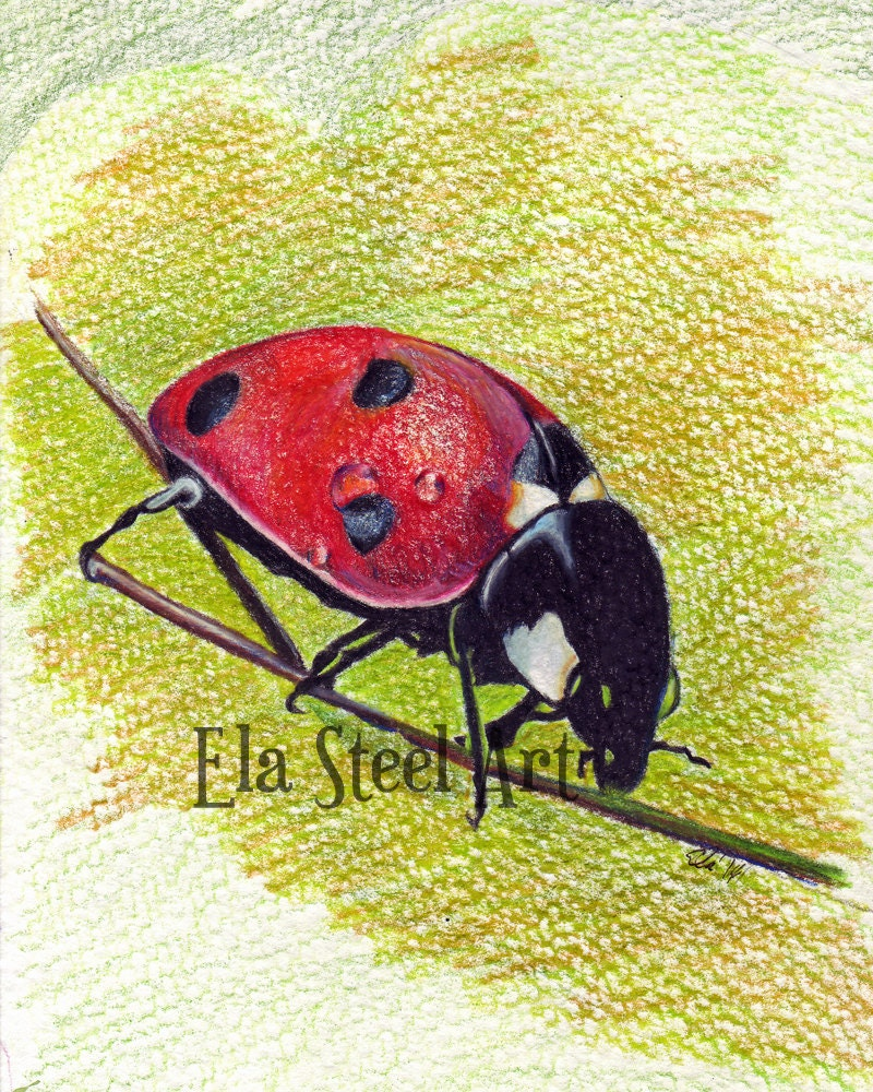 LADYBUG PRINT 8x10 of a colored pencil drawing by Ela Steel