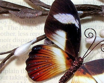Butterfly Embellishments Cappuccino