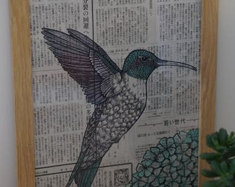 Framed illustration of a hummingbird in ink