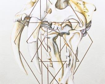 Sabertooth Skull Art Print