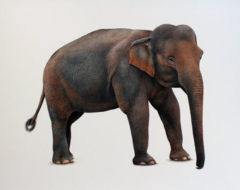 elephant realistic fine art painting, hand painted