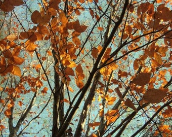 Copper Autumn Photograph - Autumn Foliage - Nature Art  - Tree Art - Wall Decor - Rusty Autumn - Nature Photograph