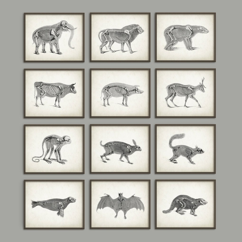 Animal Anatomy Posters Set of 12 Vintage Anatomy