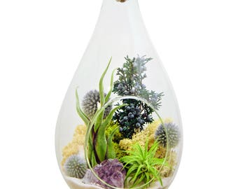 """Large Hanging Air Plant Terrarium Kit with Amethyst Crystal / 13"""" Teardrop Shabby Chic"""