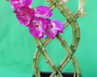 Lucky Bamboo, 8 Stalks, Braided, 10'' tall and 3'' Black Ceramic Pot (FREE SHIPPING)