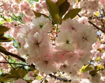 Cherry Tree Paradise