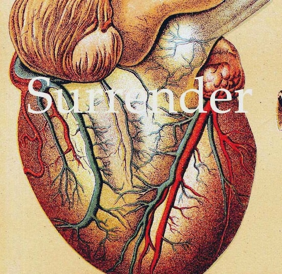 Human Anatomy Heart Liver Stomach Lung Vintage Medical