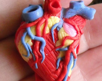 Anatomical Heart Necklace, Science, Geekery, Organ, Polymer clay Anatomy Necklace, Geeky, Jewelry,