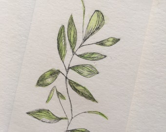 FREE US Shipping--Botanical Drypoint with Watercolor